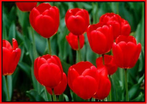 Flores para levantar o astral!